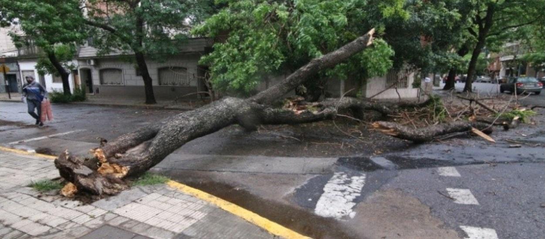 Árboles caídos y anegamientos ocasionados por la fuerte tormenta