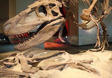 Reviven al brontosaurus, pero sólo de nombre