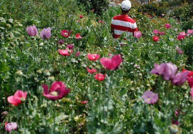 La más grande pileta de opio de Neemuch